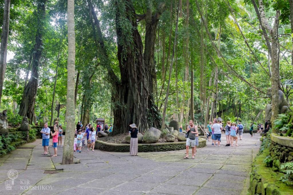 Monkey Forest, Bali